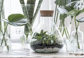 Diy Planten Terrarium Intratuin