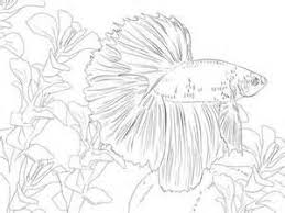 Betta Coloring Pages For Adults Coloring Pages Betas And Goldfish