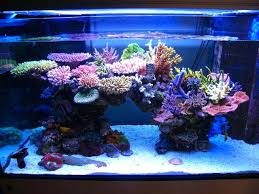 full image for tank an nice reef lighting schedule led best for philippines