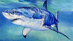 great white shark painting. Fine Great To Great White Shark Painting R