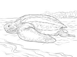 Realistic Leatherback Turtle Coloring Page Free Printable Coloring