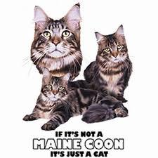 Maine Coon Cat Womens Short Sleeve T Shirt 21414hd4