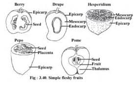 The Fruit Structure And Classification Concepts Videos