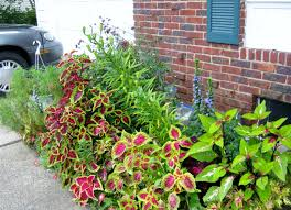 Garden Design with Plant u Coleus Seed Saving and Volunteers MINDING MY PuS  WITH Q with