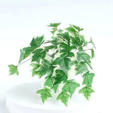 english wall decor real touch plant ivy for wall decor english class wall decoration