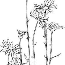 Small Picture Cartoon of Angry Daisy Flower Coloring Page Cartoon of Angry