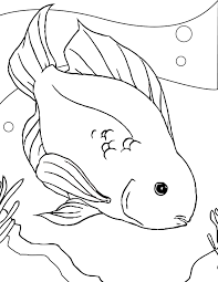 cichlid animal coloring pages