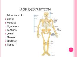 Orthopedic Surgeon Powerpoint