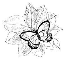 coloring pages flowers erfly and flower