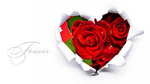 rose flower love forever wallpaper hd 12733739 wallpaper