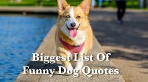 Funny Dog Quotes New The Biggest List Of Funny Dog Quotes India Pups