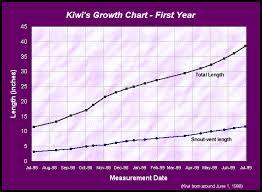 Kitten Size Chart By Age Www Bedowntowndaytona Com