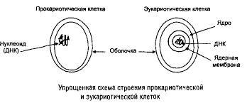 Реферат Строение и состав живой клетки com Банк  Строение и состав живой клетки