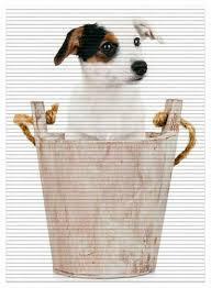 Terrier Mehr Als 2000 Angebote Fotos Preise Seite 7