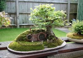 bag end bonsai 1jpg bonsai tree for office