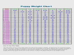 Awesome German Shepherd Weight Chart 14 Photos Sheslap