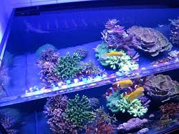 full image for 10 steps to follow for a successful reef tank led lighting for reef