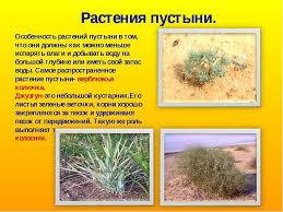 Реферат на тему растения полупустынь и пустынь Интересное в мире  термобелье реферат на тему растения полупустынь и пустынь холодное время