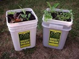 bucket gardening. 1 Reply To \ Bucket Gardening