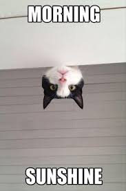 Good Morning Monday Photos In Funny Good Morning Cat Dump A Day 23