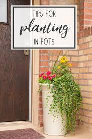 large flower pots large plant pots
