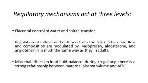 Amniotic Fluid Ppt