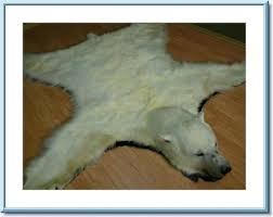 polar bear rug also polar fur traders polar bear rug polar bear skin rug canada
