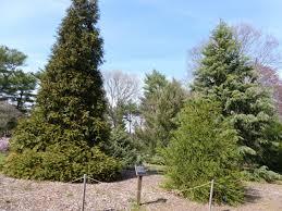 the pinetum at clark botanic garden