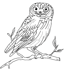 Owl Coloring Pages Coloring Page 21 Free Printable Coloring