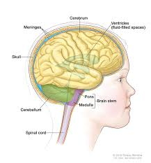 oedipus rex essays cheap essay writing service us essay essay questions nervous system