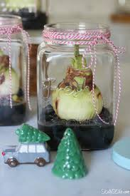 i love this amaryllis bulb in a jar make a fun gift kellyelko