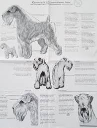 Wheaten Terrier Size Chart Scwtca Ordering Publications