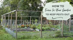 fence in your garden to keep pests out