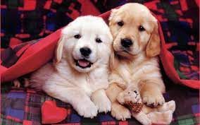 Cute Dogs And Puppies Wallpaper ...