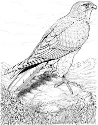 Small Picture Real life looking coloring pages of detailed hawk Bird Coloring