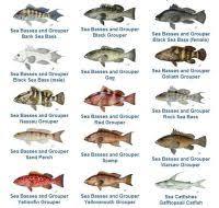 Port Phillip Bay Fish Species Chart Port Philip Bay