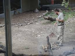 zookeeper cleaning. Fine Zookeeper Actually  Throughout Zookeeper Cleaning  Zookeeping 101