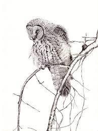 ペン 動物 鳥 Pixabayの無料写真