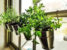 Kitchen Window Herb Garden Window Herb Garden Ikea Hack Jillm Hang Plants Without
