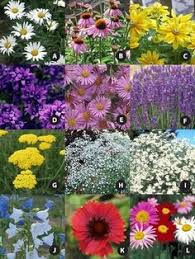 Small Picture 15 Fast Growing Flowers for a Cutting Garden Gardens Spring and