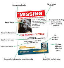 Lost Cat Flyer Lost Pet Posters And Flyers For Your Missing Pet