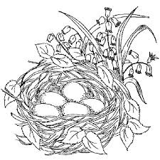 Nest Coloring Page Empty Bird Eagle Baby Syrupbutteredclub
