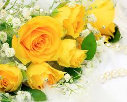 hd images collection yellow roses by clara mickens