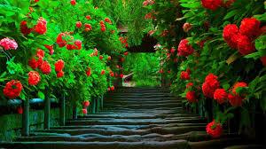 Beautiful Nature Love Wallpapers ...