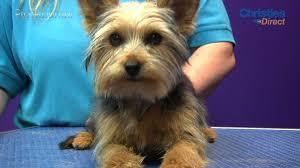 yorkshire terrier haircuts. Modren Yorkshire YouTube Premium And Yorkshire Terrier Haircuts U