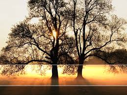 Light Tree Ppt Tree Sunlight Landscape Backgrounds For Powerpoint Nature