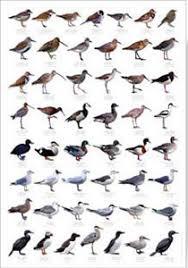 Bird Charts And Posters Bird Spot