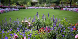 flower gardens pictures. Purple Flower, Flower Border, Lawn Garden Design Calimesa, CA Gardens Pictures