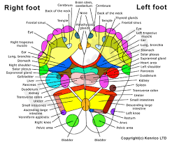 Reiki Foot Chart Massage Reiki Reflexology Nn Va Reflexology