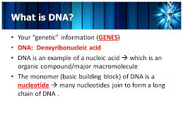 The central dogma states that information flows from. Chapter 8 From Dna To Proteins Day One What Is Dna Your Genetic Information Genes Dna Deoxyribonucleic Acid Dna Is An Example Of A Nucleic Acid Ppt Download